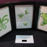 Trilogie de papillon exotiques