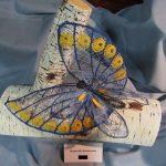 Butterfly Süstérseel